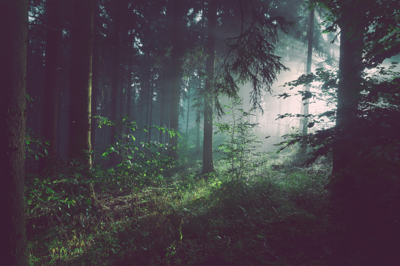 free dark wood